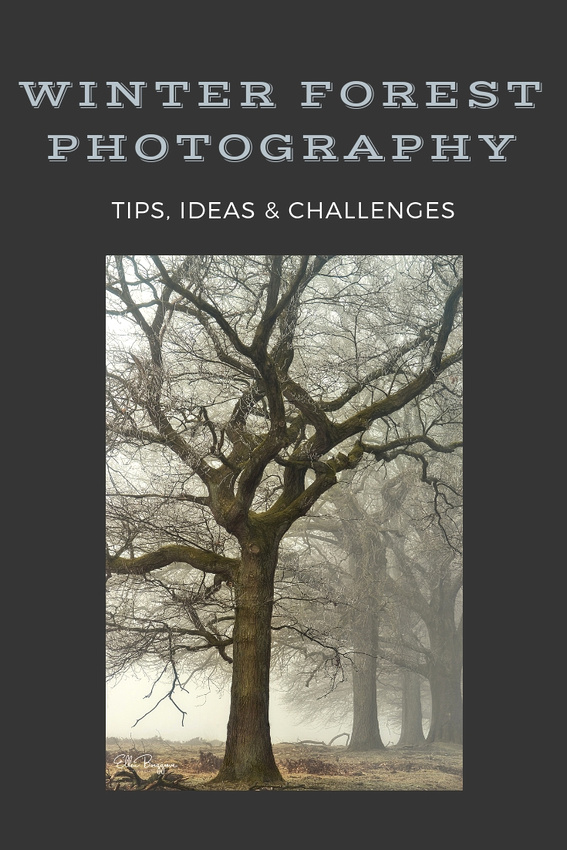 Winter Forest Photography: 10 tips and solutions to possible challenges and problems when photographing in the cold