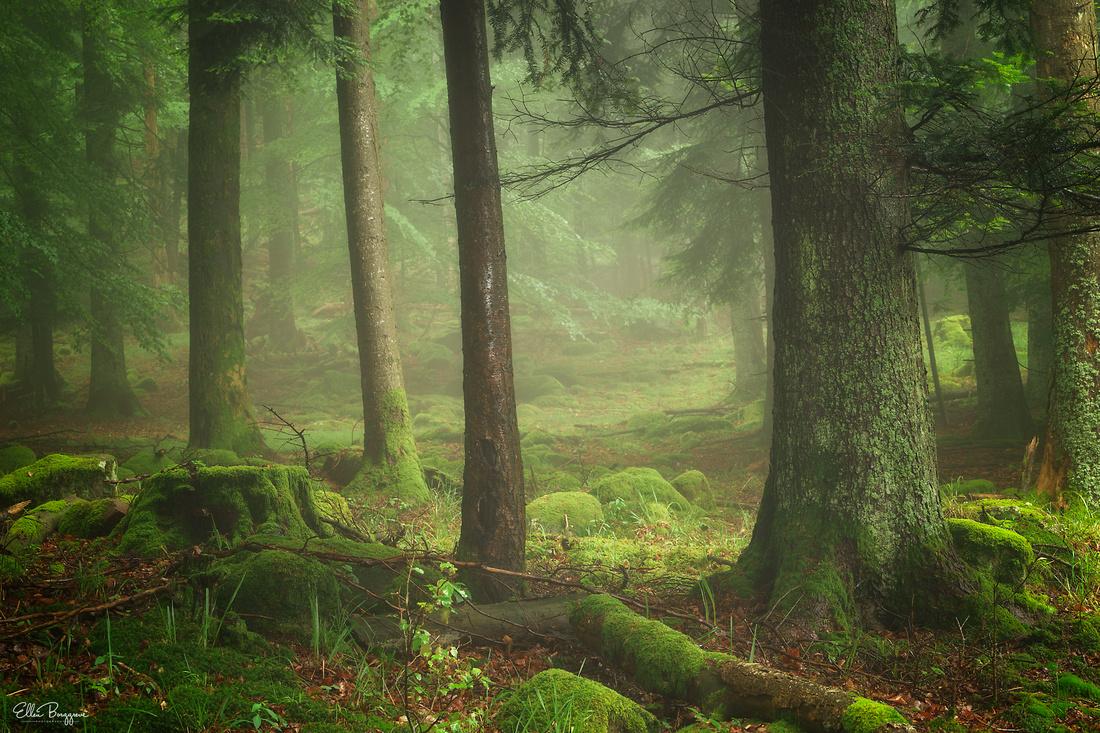 Velvety green fairytale forest