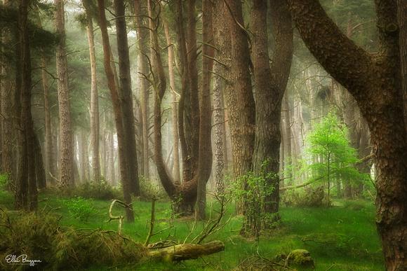Fairytale Spring Woodlands