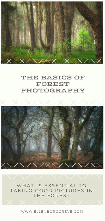 5 basics for photographing forests
