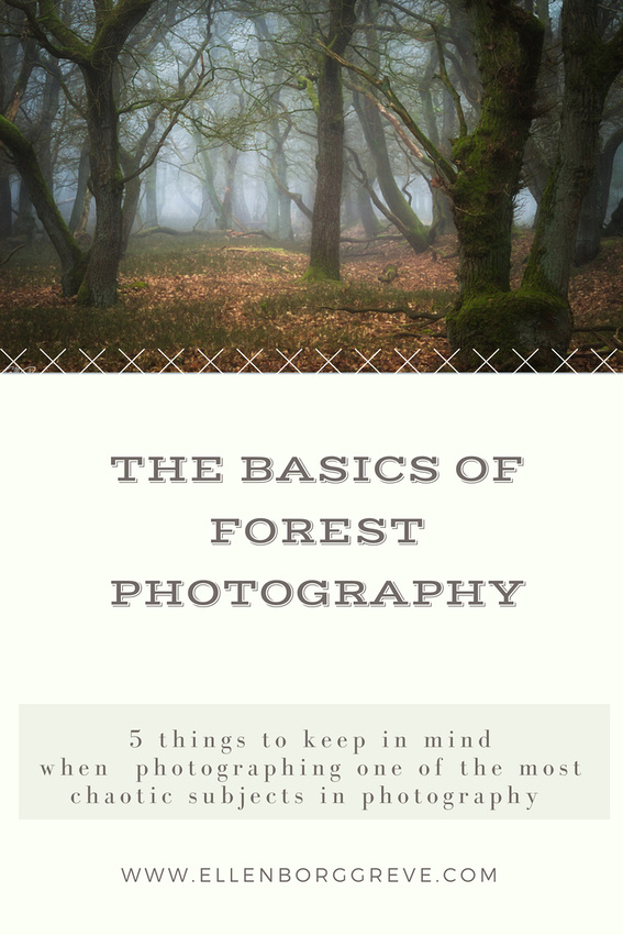The basics of forest photography
