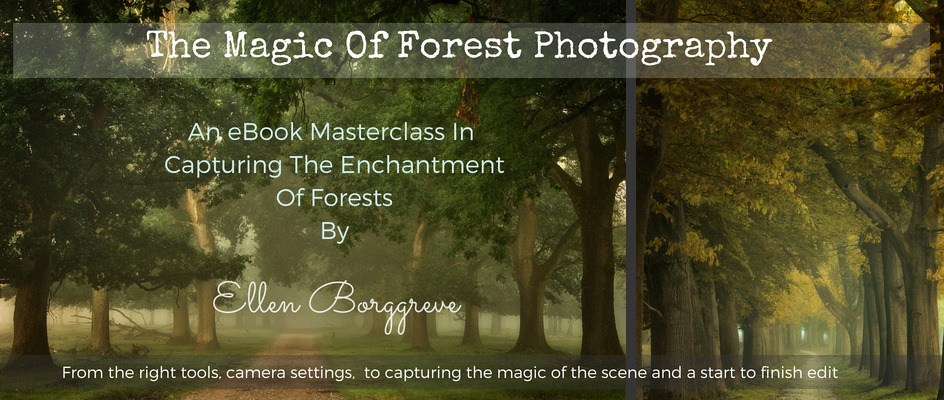 Learn Forest Photography : Masterclass eBook