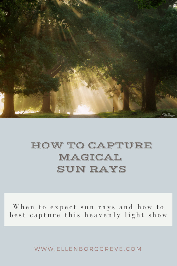 How To Capture Sunbeams In The Forest