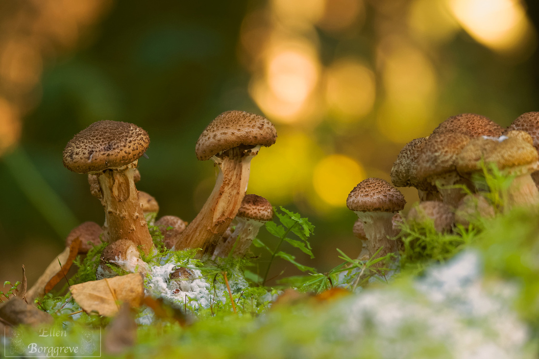Fall Photography: 10 Ways To Capture The Magic Of Autumn