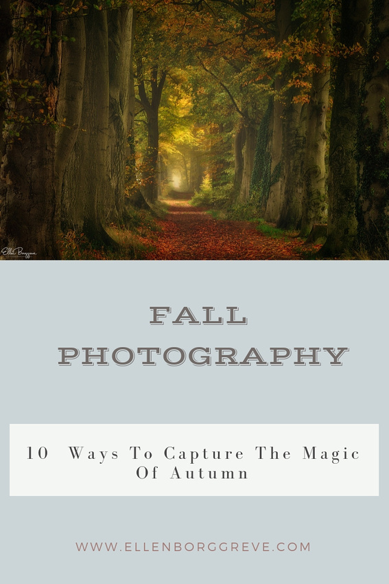 Fall Photography:10 ways to capture the magic of autumn