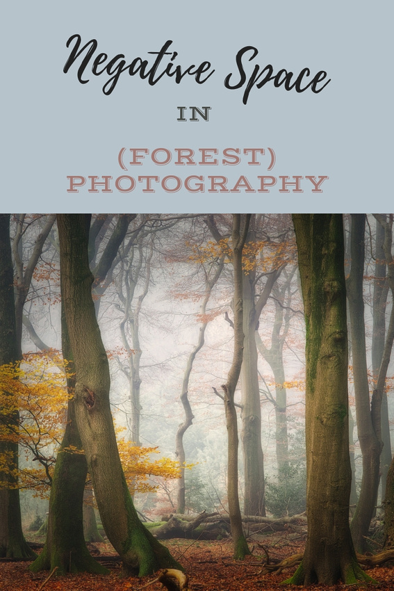 Negative Space In (Forest) Photography