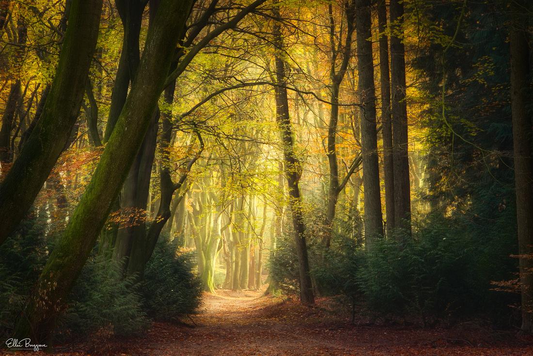 The Speulderbos In Autumn