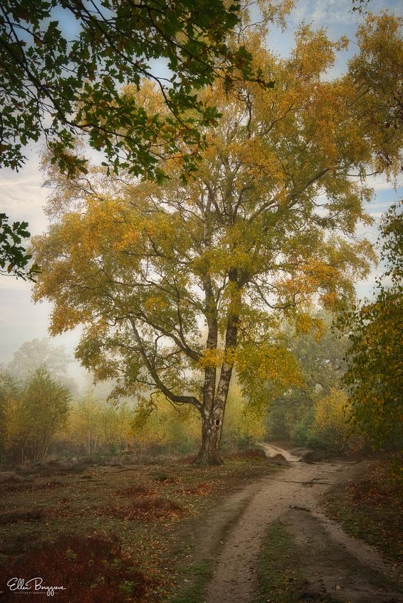 Season Of Mellow Mists