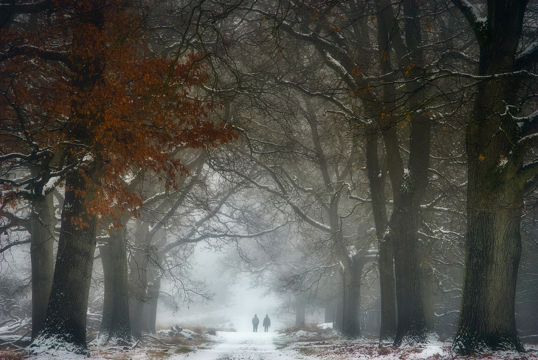 Misty winter scene of a tree lined path with two people