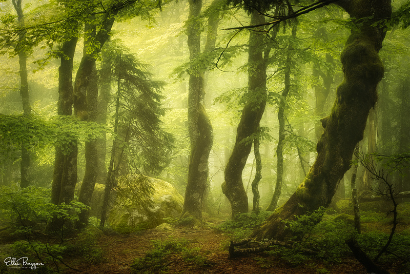 Fairytale forest scene with vibrant greens