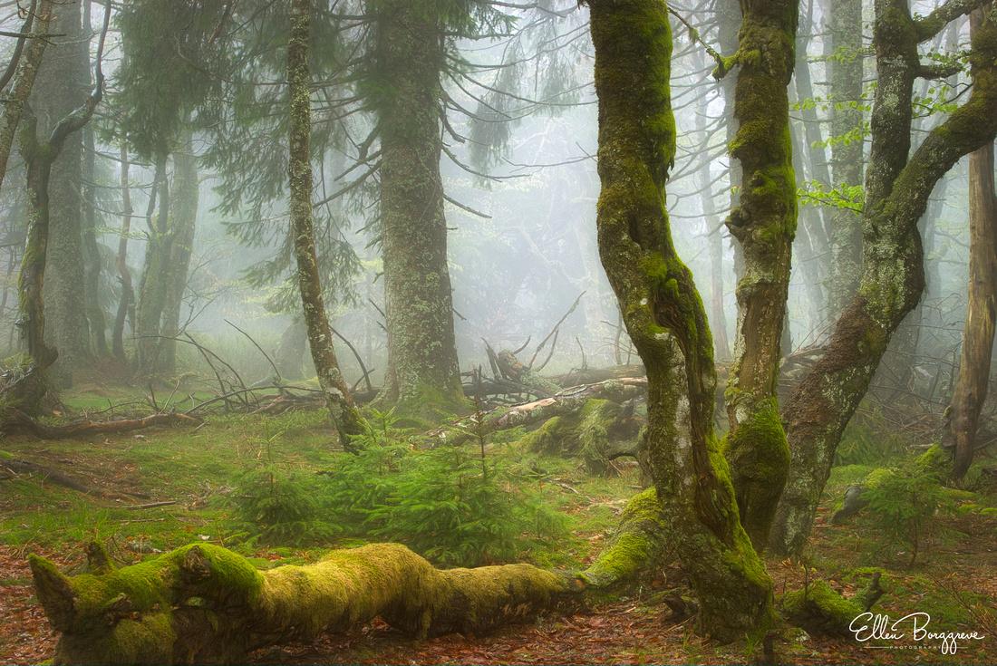 Forest Of Velvet