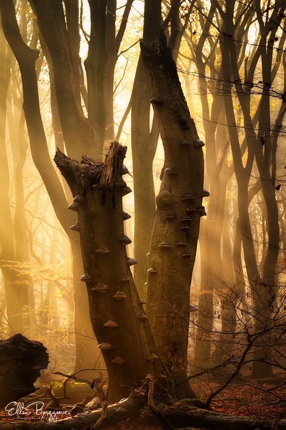 Goblin Woods