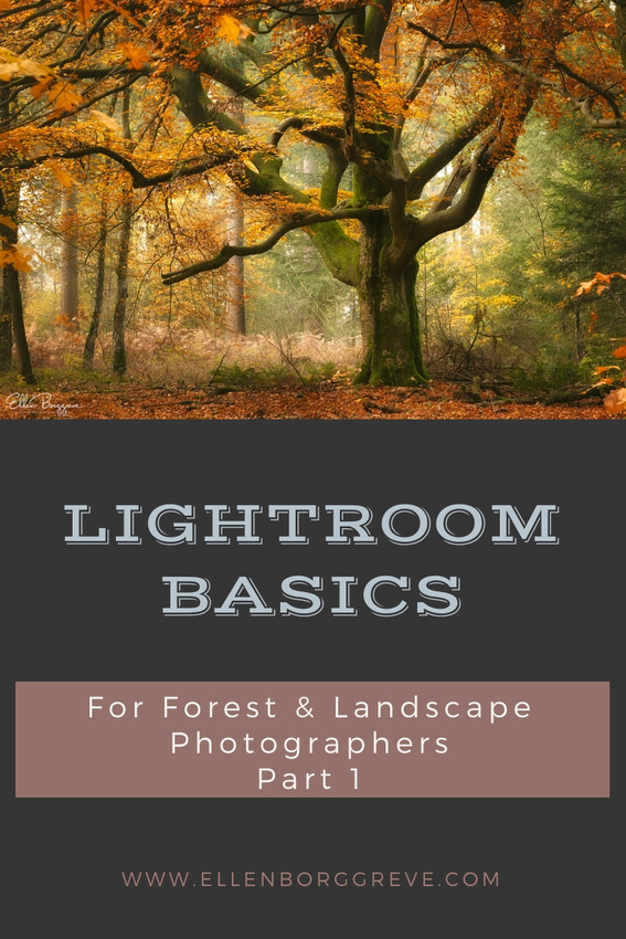 Lightroom Basics For Forest and Landscape Photographers Part 1