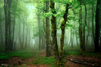 Magical green spring forest in the mist