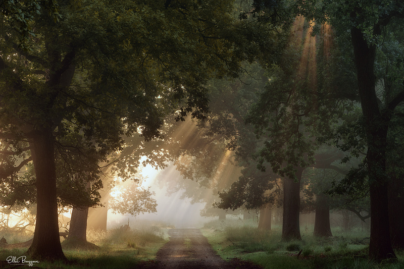 Atmospheric painterly picture of sunlight through the fog in a forest path
