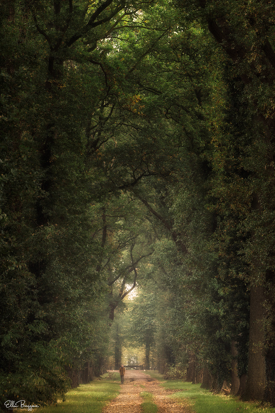 An early morning stroll in a Dutch forest