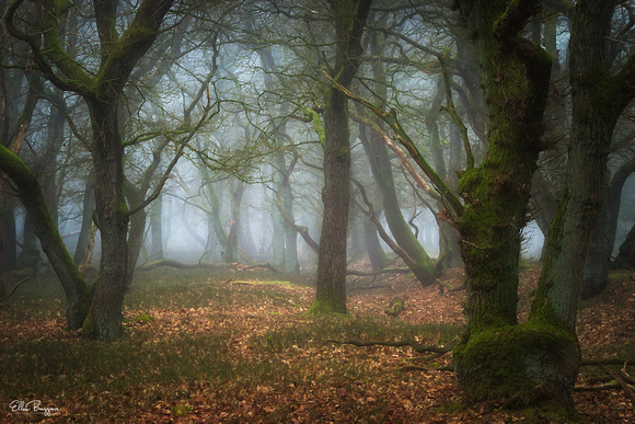 Fairytale Forest With Oak Trees