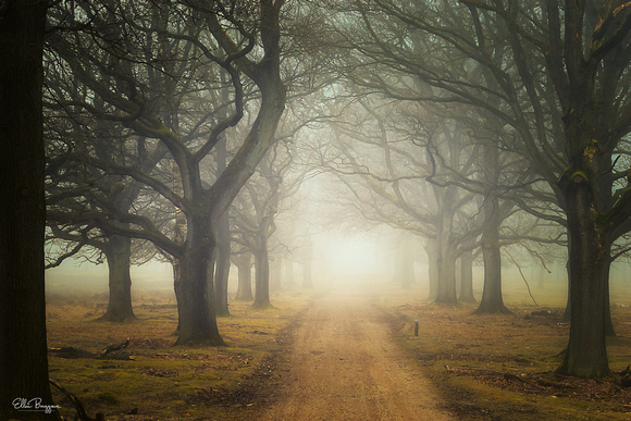 Forest path of a foggy morning